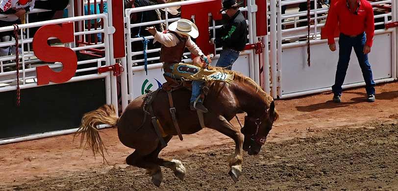 Calgary Stampede Rodeo Tickets Vivid Seats